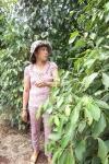 Chị Huế bên vườn tiêu ở Ia Blang, Chư Sê